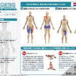 ゆがみーる筋肉測定レポートのご紹介